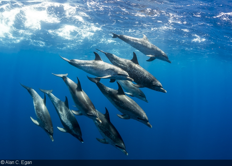 Dolphin Alan C Egan