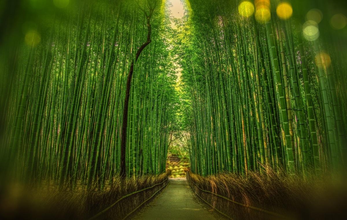 bamboo -qrius.jpeg